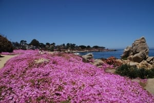 pacific grove ca property management